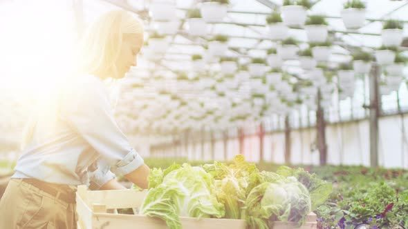 Hard Working Female Farmer Packs Box with Vegetables