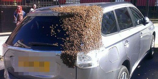 Σμήνος μελισσών κυνηγούσε ένα ΙΧ για 2 μέρες! (Foto)