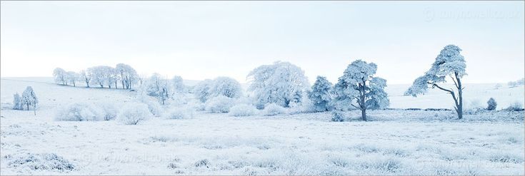 Frost and snow covered trees in Somerset, England.