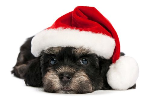 Are you bummed that #Christmas is over? Read over these #tips to help you #cope.