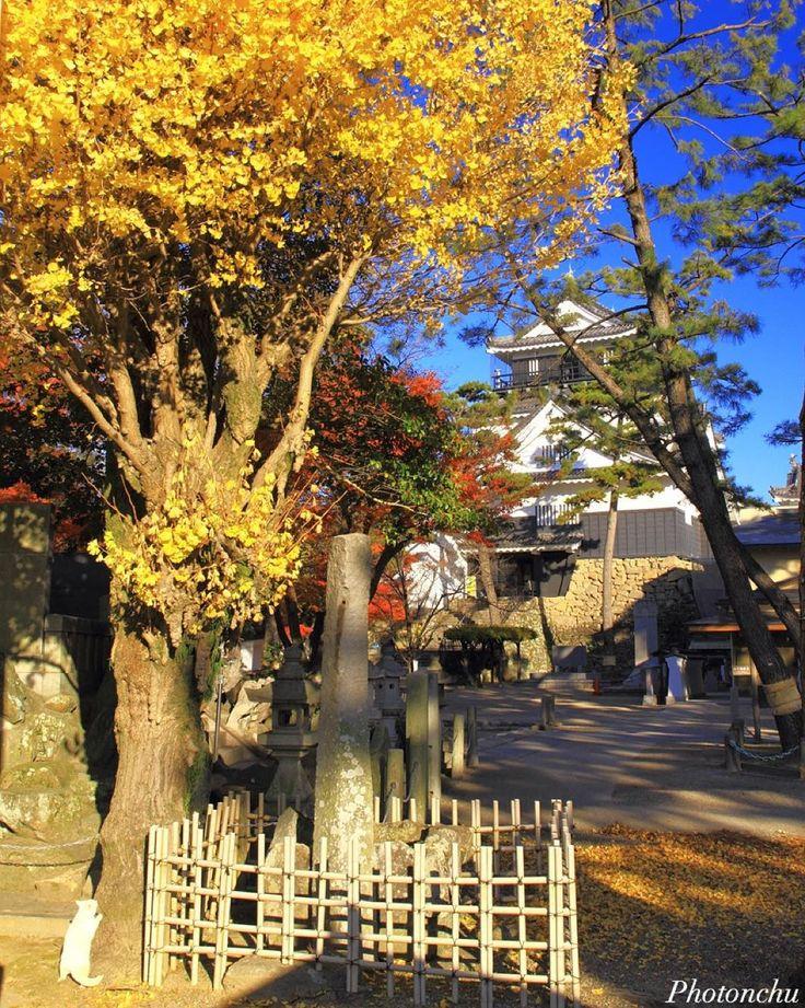 にゃんこを探せ!! * 天守閣も探せ!! * 2本の松が邪魔で有名な 岡崎城にて♪ Location:愛知県岡崎市 #城 #日本100名城 #castle #岡崎城 #aichi #ファインダー越しの私の世界 #写真好きな人と繋がりたい #canon #7d #leaf #autumn #はなまっぷ #紅葉 #銀杏 #イチョウ #ねこ #猫 #cat #japan_daytime_view #ig_japan #ig_nippon #instajapan #okazaki #okazakicastle #yellow #岡崎 #lovers_nippon #icu_japan #team_jp_