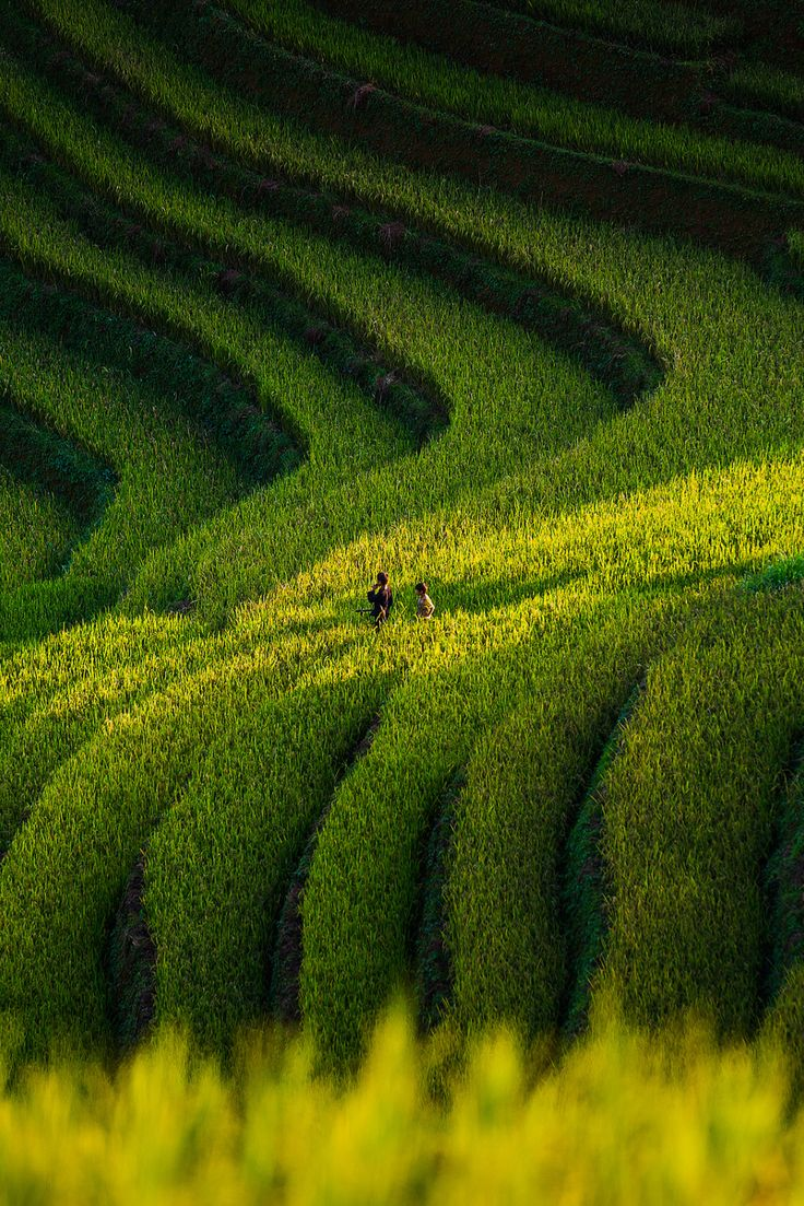 The Little (children on the rice fields) by Por Pathompat
