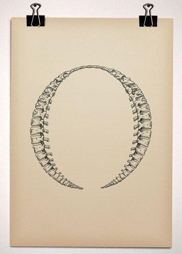 Typeface Anatomy by Björn Johansson, via Behance