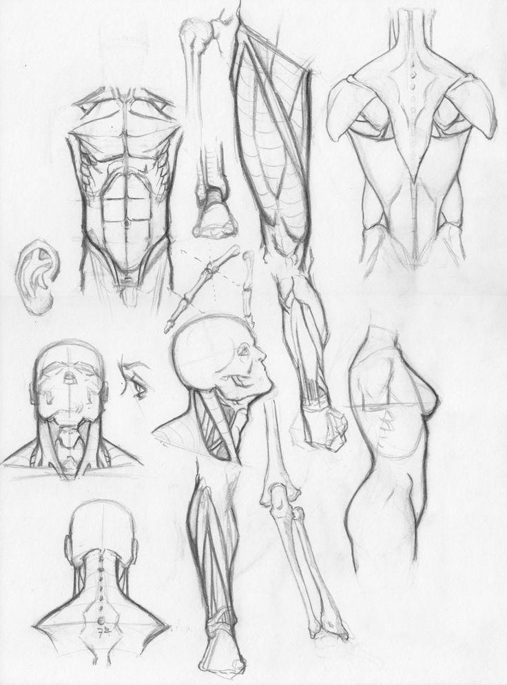 Random anatomy sketches by *RV1994 on deviantART