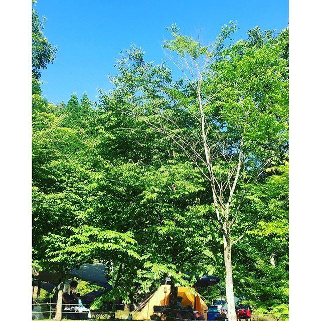 【happymacaron82】さんのInstagramをピンしています。 《3連休はキャンプ( ๑˃̶ ॣꇴ ॣ˂̶)♪⁺·✧ * 熊本まで来ました〜雨の予報だったけど晴れ女パワー発揮し晴天に☀️ * 10数年ぶりのテントでのキャンプ!川遊びも釣り堀もプールもあり、温泉も入り放題のキャンプ場星空の下、温泉入るの楽しみ〜♡ * * #キャンプ #キャンプ初心者 #テント買っちゃったよ #いい天気 #晴れ女 #キャンプ日和 #sky #bluesky #instagood #instasky #green #緑は#森 #熊本は#南小国 #山鳥の森 #kumamoto #aso》