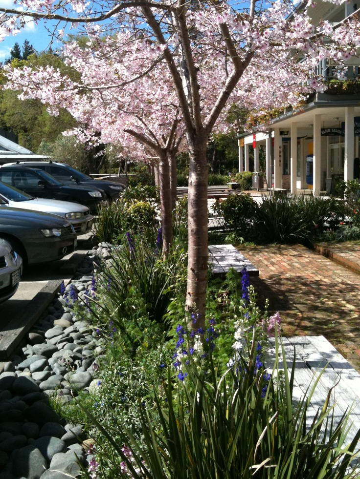 I love visiting Matakana Village any time of year - but when the spring blossoms are out - its especially beautiful ........even in the carpark!
