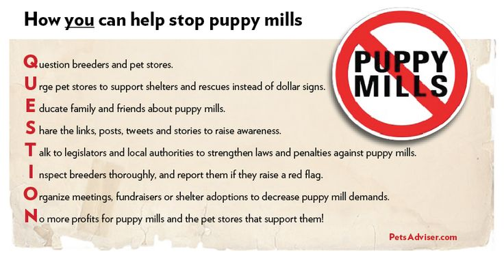 what is the most effective way to stopping puppy mills | Puppy Mill Statistics in 2012