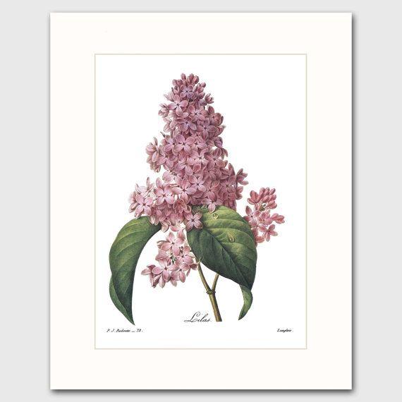 Lilas Art w/Mat (fleur mauve Wall Decor, 8ème cadeau d'anniversaire, chalet chambre oeuvre) feutré botanique imprimer