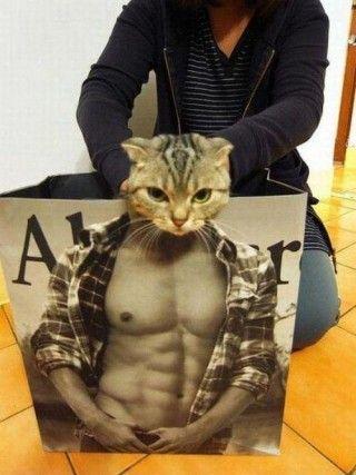 gatto-muscoloso-lol