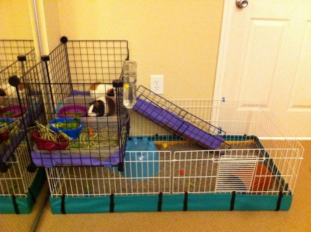 Addition to the midwest habitat cage guinea piggles for Guinea pig cages for two