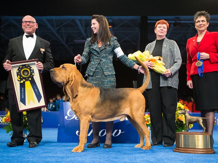 The Winner of The National Dog Show Is ... http://www.peoplepets.com/people/pets/article/0,,20877310,00.html