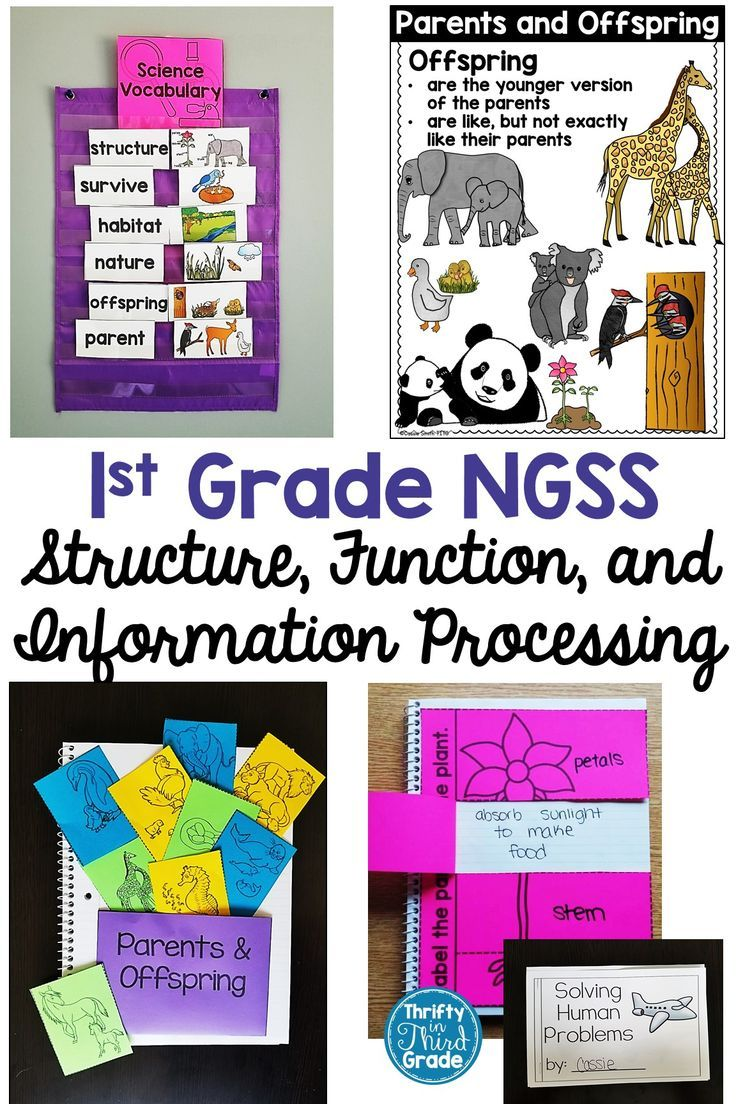 medium resolution of First Grade NGSS Unit covering plants