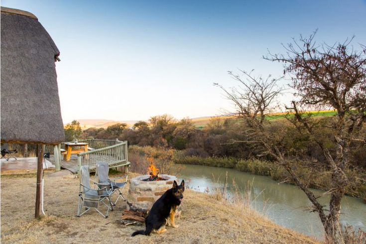 That's my dog, Tao! I had the most wonderful opportunity to travel with my folks and two dogs to Tugela River Lodge. You're encouraged to bring your whole family, including hounds, and make use of the riverside and the bush walks.