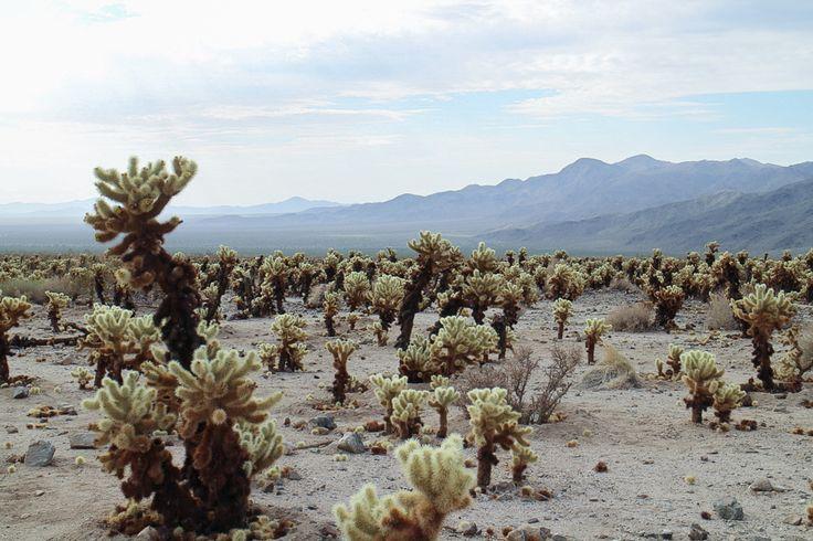 Cactus + Rocks