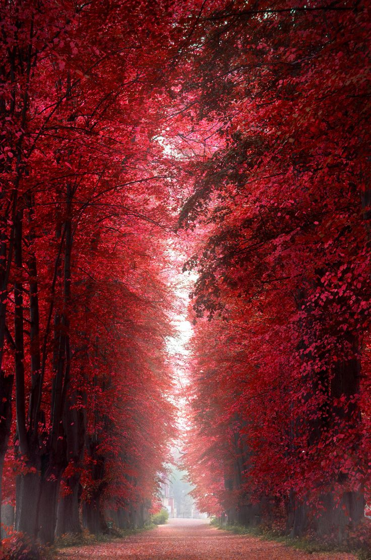 """Burning Red Forest"" by Henrik Wulff Petersen on 500px - Burning Red Forest, Roskilde, Denmark"