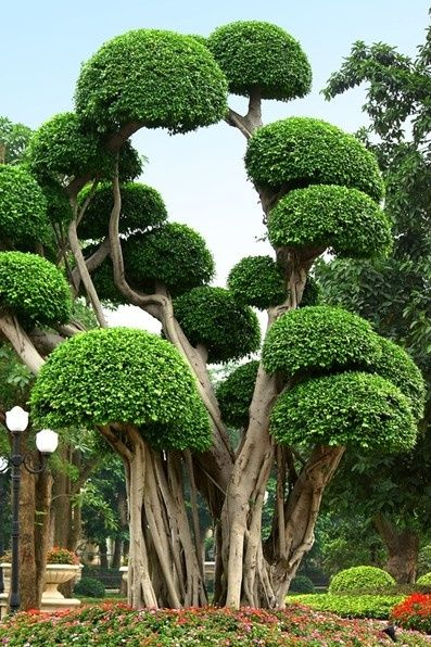 Emmy DE * Cool looking trees Beautiful deco Garden: