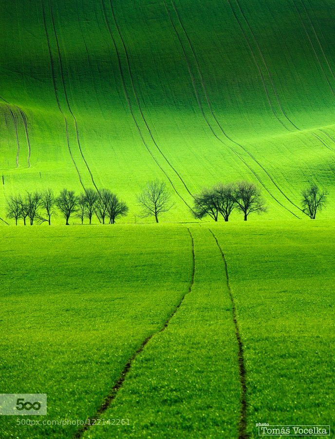 Green lines by tomvoc