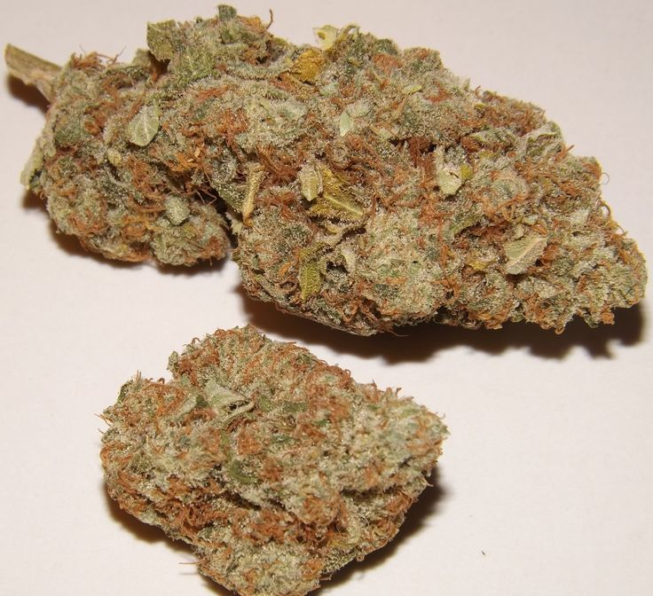 Choko cannabis strain from Catalonia, Spain