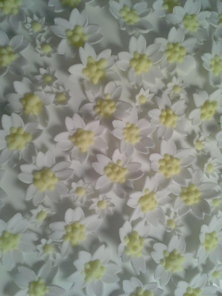 sugar gumpaste fondant daisies  https://www.etsy.com/au/shop/EVLovelyExpressions?ref=hdr_shop_menu