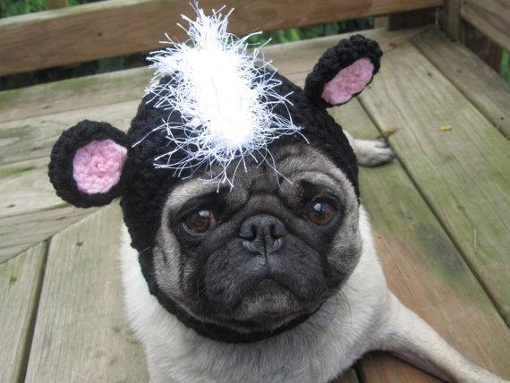 Amazing Pug Canine Adorable Dog - 03035ebd67595ad77c95193bdf03f9c7--cute-pugs-hats  2018_127019  .jpg