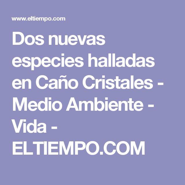 Dos nuevas especies halladas en Caño Cristales - Medio Ambiente - Vida - ELTIEMPO.COM