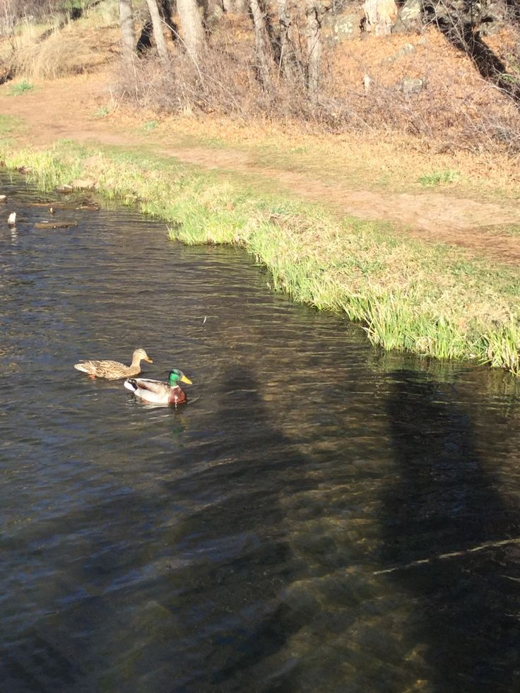 Photo of cool looking ducks by Mark Mearin