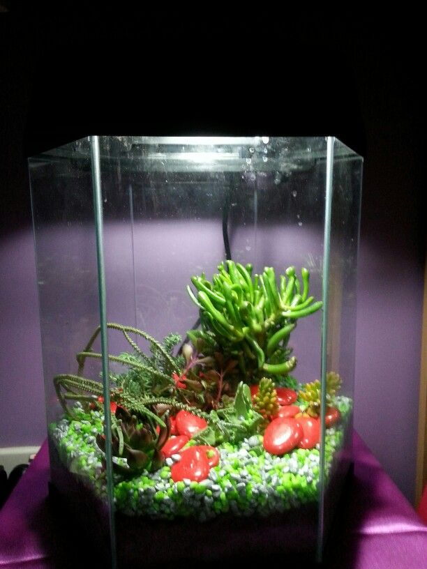 17 best images about succulent terrariums on pinterest for Fish tank terrarium
