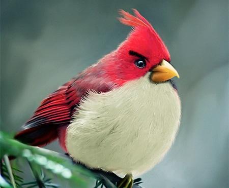 Angry Cardinal