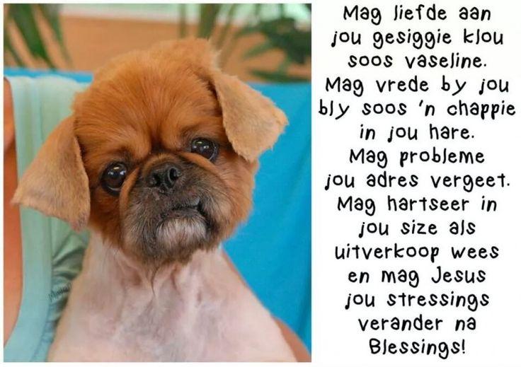 To you with Lotz of Love... Mag Liefde aan jou gesiggie klou soos Vaseline...