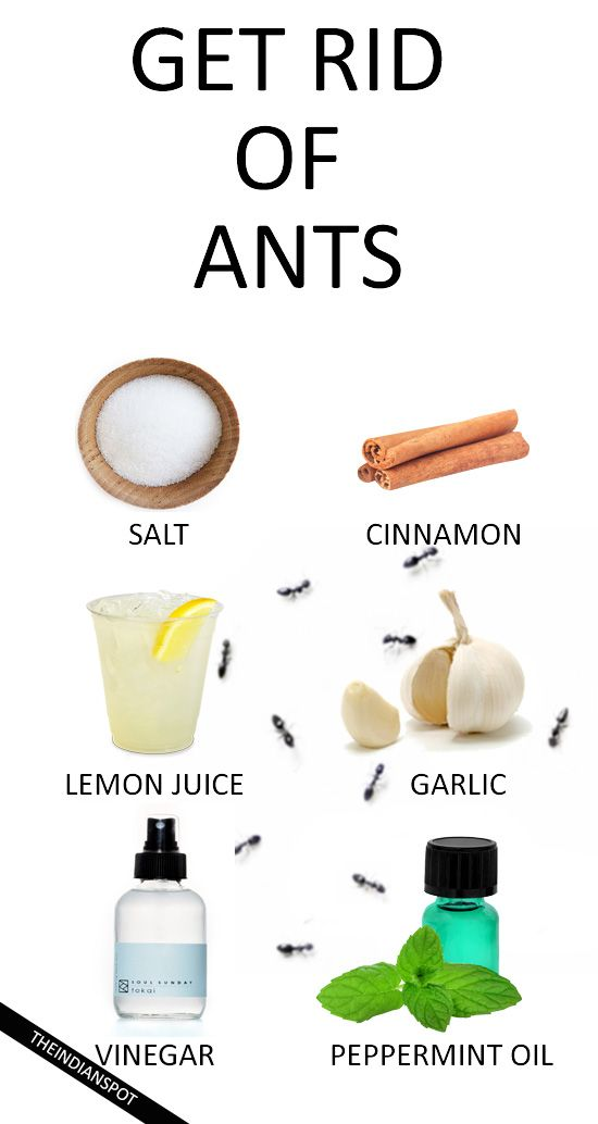 Top Tips To Get Rid Of Ants Naturally