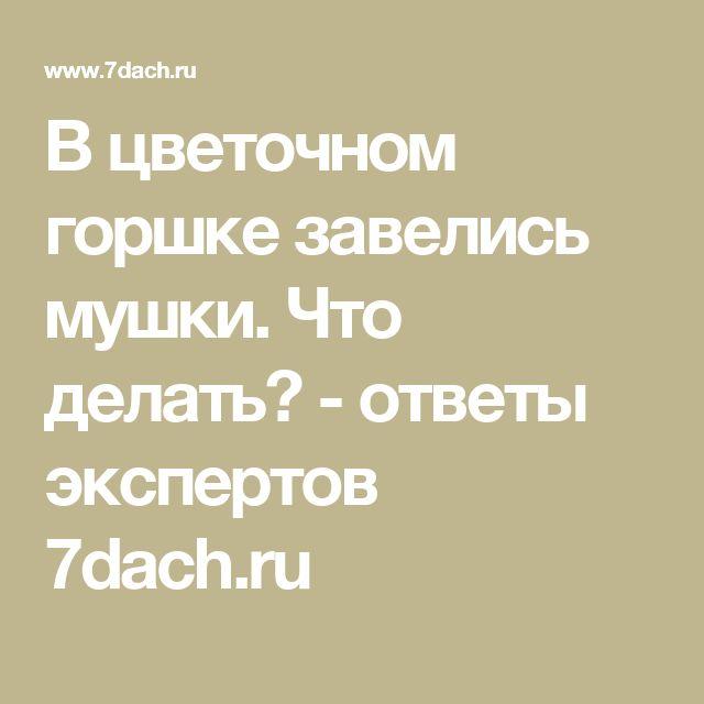В цветочном горшке завелись мушки. Что делать? - ответы экспертов 7dach.ru