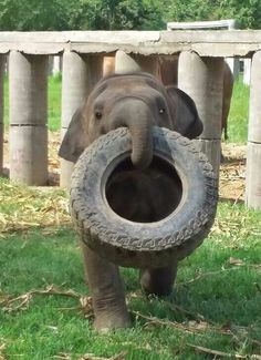 """""""Let's Play!"""", adorable Baby Elephant with car tire"""