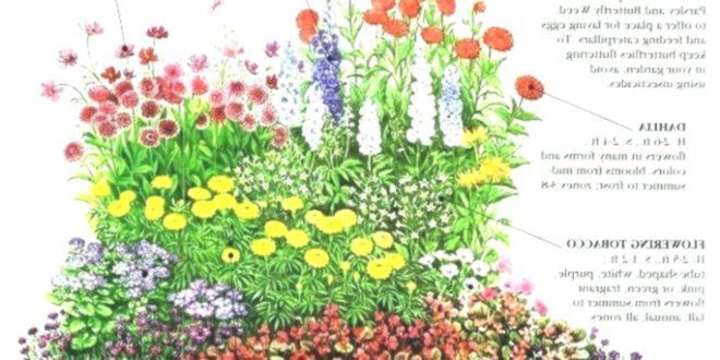 Zone 8 Flowers Zone 3 Garden Plans Elegant Best Ideas About Prairie Garden On Of Elegan Autumn Flowering Plants Garden Planning Gardening Blog