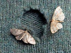 Comment se débarrasser des mites : les mites sont des papillons sauvages qui s'installent chez vous à la belle saison, et se reproduisent à toute vitesse, créant un véritable cercle infernal pour vous en débarrasser. Qu'elles soient alimentaires ou textiles, les mites sont résistantes et …