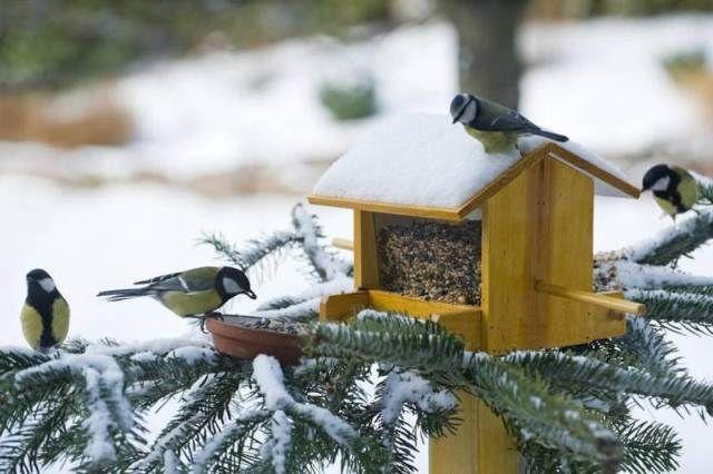 Kertgondozás decemberben | Életmód 50