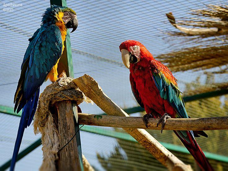 https://flic.kr/p/xEZhiG | parrots | Sony A7s FE 70-200mm f4
