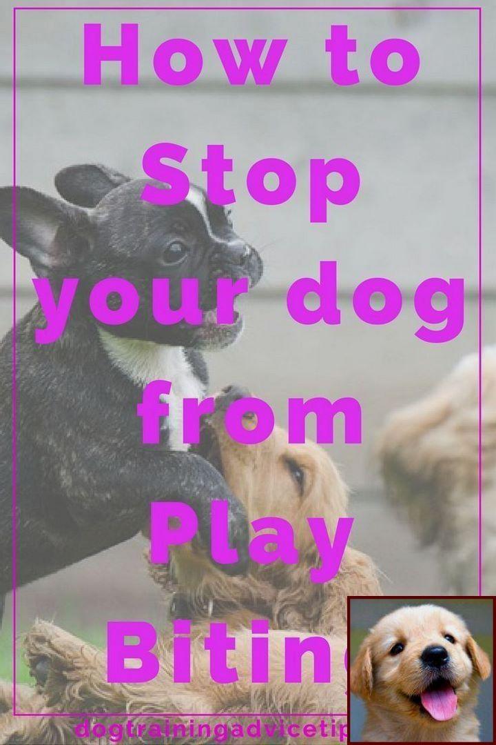 Dog Behavior In The Wild And Dog Training Classes Lockwood