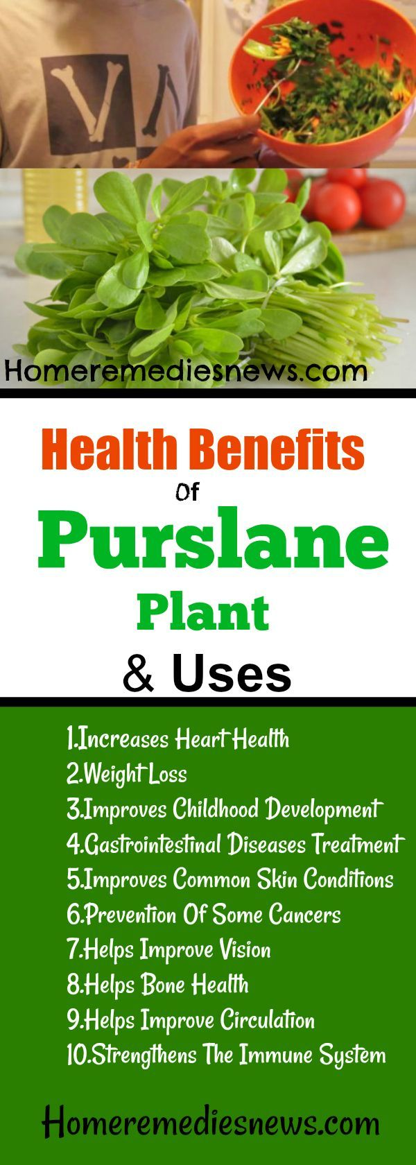 10 Best Health Benefits Of Purslane Plant And Uses - Discover here the best purslane plant health benefits and uses. Purslane can be used at home for skin care, weight loss, slave, bone health and as a salad.It is believed that the higher levels of Omega 3 fatty acids in the Purslane plane can help small children with early development.   1.Increases Heart Health 2.Weight Loss 3.Improves Childhood Development  4.Gastrointestinal Diseases Treatment 5.Improves Common Skin Conditions…