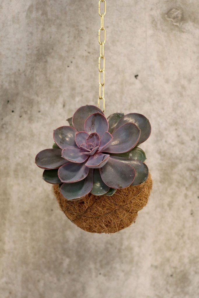 """Kokedama eller """"planteplanet"""" DIY byDuhn. Hyggeligt projekt med planter // Cosy project with plants"""