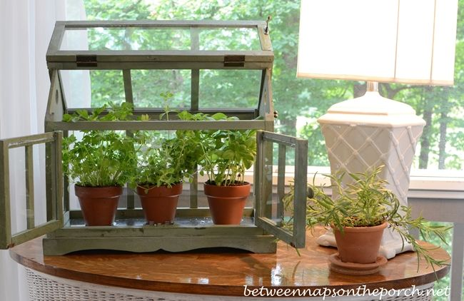 A Tabletop Greenhouse For Growing Herbs Growing Herbs
