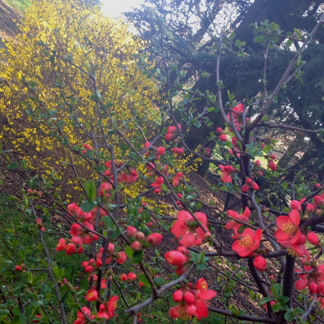 Fioriture in giardino