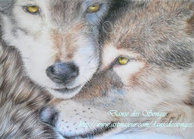 Portrait Loups réalisé avec des crayons de couleur : Dessins par danse-des-songes