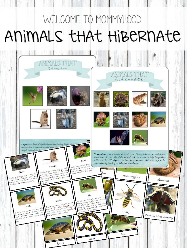"""Montessori """"Animals That Hibernate"""" Printables (free; from Welcome to Mommyhood)"""