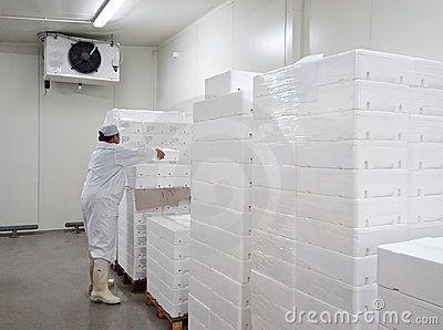 Cold storage worker, arranging polystyrene transport boxes for fresh food.