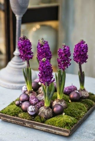purple hyacinths - flower arrangement with christmas ornaments and moss