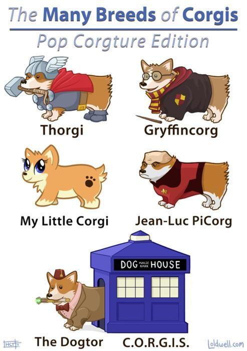 Pop Corgture: Corgis, Geek, Animals, Dogs, Stuff, Funny, Corgi S, Doctor