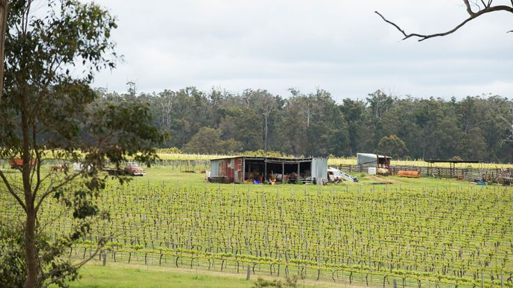 Vineyard and shed in the Manjimup wine region