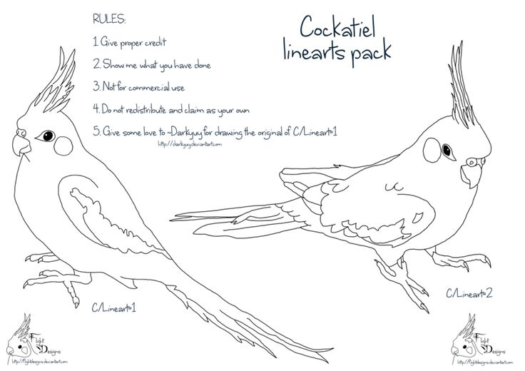 Cockatiel linearts pack by FlightDesigns