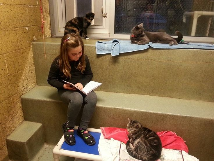"The point of the ""Book Buddies"" program is to encourage children to read while simultaneously comforting the cats, according to the website."