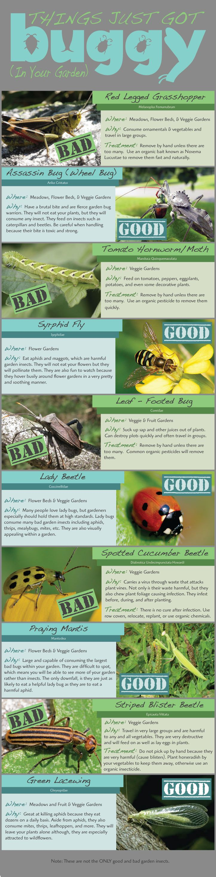 Guide to 10 Garden Bugs! The good, the bad, and the NATURAL remedies! #organic #bugs #good #bad #garden #gardenbugs